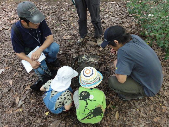 特定非営利活動法人 樹木・環境ネットワーク協会の写真