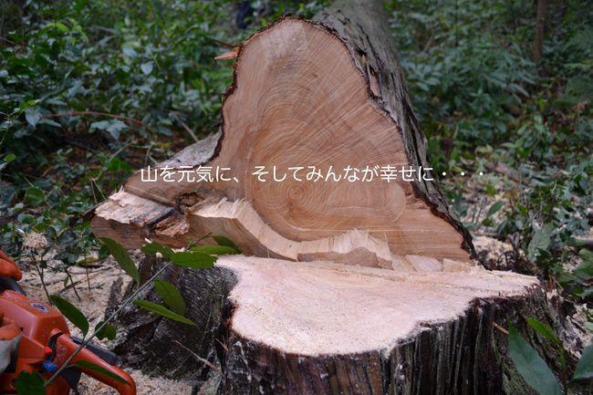 NPO法人森林をつくろうの写真