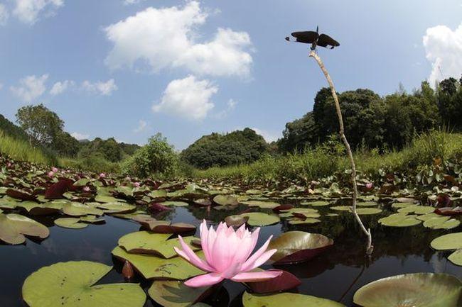 公益社団法人トンボと自然を考える会の写真