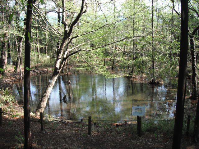 特定非営利活動法人 こんぶくろ池自然の森の写真