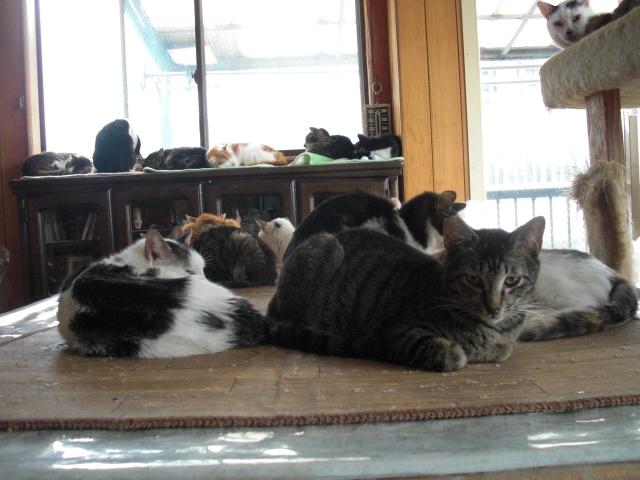 NPO法人 捨て猫をなくす会の写真