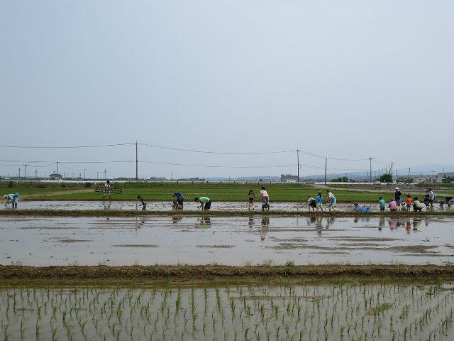 特定非営利活動法人河北潟湖沼研究所の写真