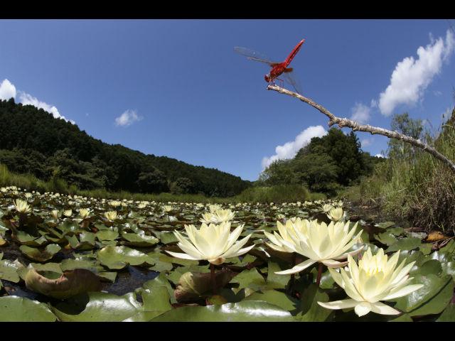 公益社団法人トンボと自然を考える会