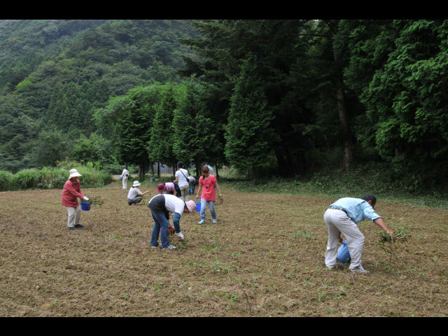 NPO法人・ツシマヤマネコを守る会の写真